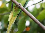 FOTO/ spuntino pappagallo