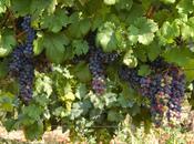 TORRAZZA COSTE (pv). L'App Consorzio Tutela Vini Oltrepò Pavese: tutta l'enocultura click