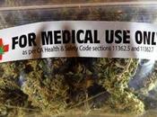 Coltivazione legale cannabis terapeutica: decolla progetto pilota