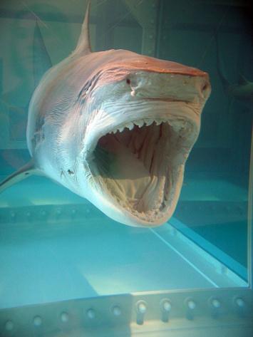 shark_damien_hirst