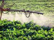Revisione deleteria pesticida Glifosato