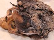 Nell'antico Egitto parrucchieri introdussero moda delle extension