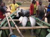 Abusi delle forze dell'ordine Angola danni pescatori/Arresti immotivati confronti prova difenderli