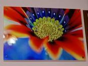 Tela Plexiglass realizzata Graphic Shot