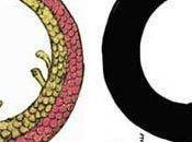 """Ourobours Enso Cerchio dell'Illuminazione"""""""
