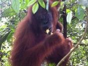 Trekking Indonesia Orang Utan, popolo della foresta