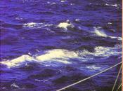 Atlantico, vasto oceano milione storie racchiuse libro