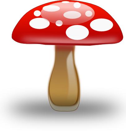 Unguenti da un fungo in una zona intima