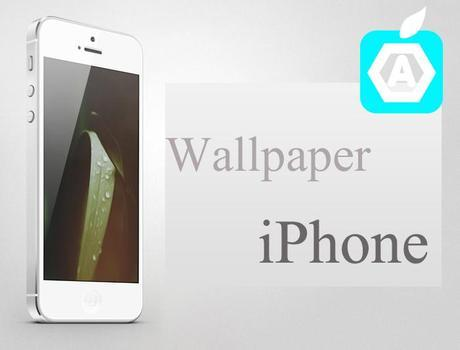 sfondi-iphone-Applefive