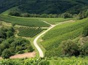 Treviso suoi vini
