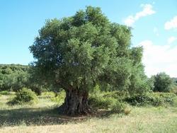 alberi sempreverdi da giardino - paperblog - Alberi Sempreverdi Da Giardino A Crescita Rapida