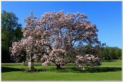 Alberi sempreverdi da giardino paperblog - Alberi da giardino sempreverdi a crescita rapida ...
