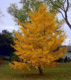 alberi ad alto fusto - paperblog - Piante Ad Alto Fusto Da Giardino Sempreverdi
