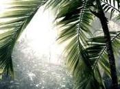 """Jungle """"j""""im"""