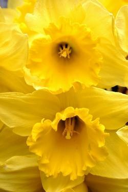 Fiori gialli nomi - Paperblog