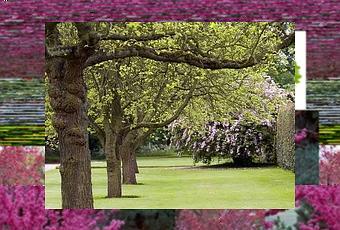 Alberi a crescita rapida paperblog - Alberi da giardino a crescita rapida ...