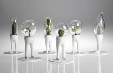 Matteo Cibic piante grasse