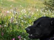 Tutte rose solo cane