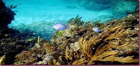 Foto Bahamas Sub 2