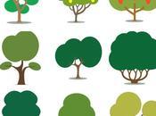 dono universale: albero cresca nome persona speciale