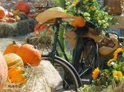 Novembre: sagre feste della zucca
