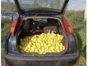 Floridia: sorpresi rubare limoni, finiscono manette siracusani