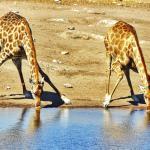 Fotografie di Viaggio dalla Namibia – Top 10