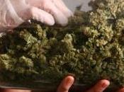 Stati Uniti, vittoria repubblicani liberalizzazione dell'uso cannabis Washington