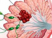 Cancro seno qualità vita