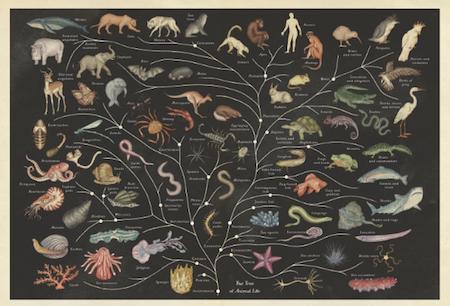 Alla Scoperta Degli Animali In Un Museo Aperto 24 Ore Su