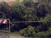 Avola: momenti paura caduta alcuni alberi, condizioni meteo miglioramento