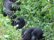 Storia Ndakasi, figlia gorilla ranger Virunga