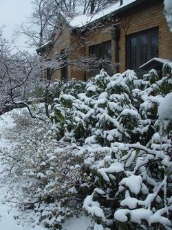 Vendita alberi paperblog for Vendita alberi da giardino online