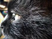 Gatto nero porta sfiga!