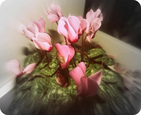 Arredare con i fiori paperblog for Arredare con fiori finti