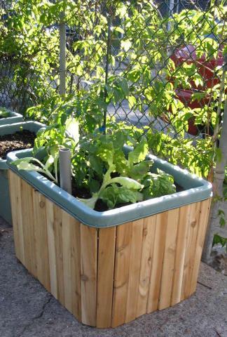 La semina diretta in vaso sul balcone paperblog for Vasi per semina