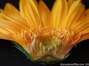 Giochiamo botanico: parti fiore