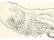 """Immagine pagina """"Atlante ornitologico: uccelli Europei: notizie d'indole generale particolare"""" (1902)"""