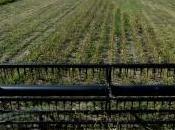 Bruxelles, salita negoziato sulla coltivazione degli Ogm. l'Italia presente ministro Galletti