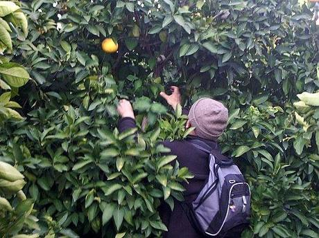 furto-arance-siracusa