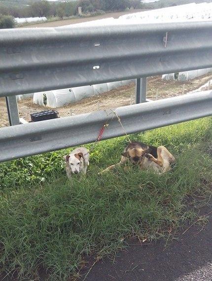 cani noto abbandonati