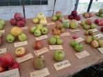 antiche varietà mele piemontesi
