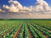 terreni agricoli: paga gennaio 2015