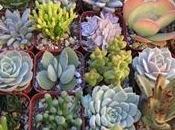 Piante grasse cactus