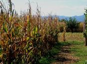 Cuore, come campo d'autunno