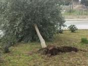 Siracusa: capodanno flagellato impetuoso grecale, danni città causati forte vento