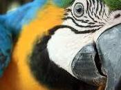 Stop all'acquisto pappagalli altri uccelli selvatici tenere casa gabbi