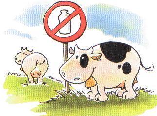 VEGAN  NEWS  DEL MESE:  VEGAN   VEGGILETTE   E   VEGRATI'…...... IL FORMAGGIO  NON  E'  Più  UN  MIRAGGIO!!!