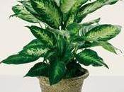 Salute piante paperblog - Piante grasse da interno poca luce ...