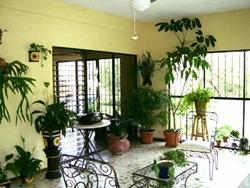 Piante Da Appartamento Poca Luce Paperblog
